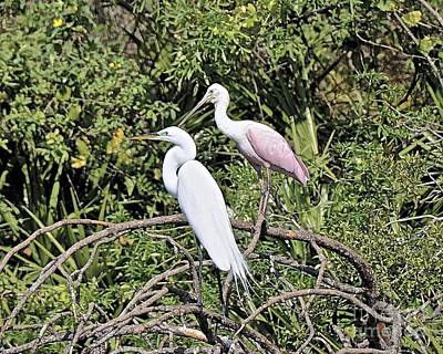 Photograph - Great Egret And Roseate Spoonbill by Carol  Bradley