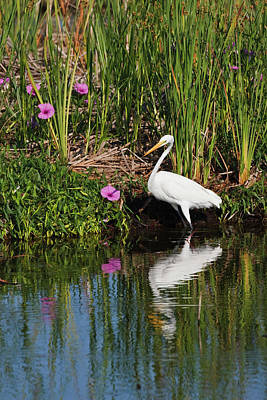 Great Egret (ardea Alba Art Print by Larry Ditto