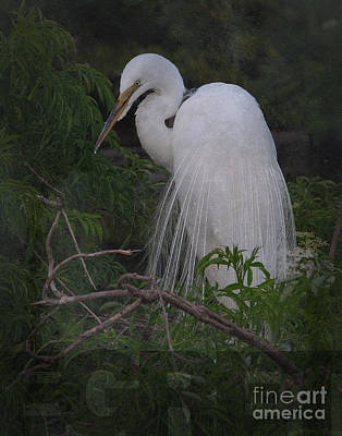 Photograph - Great Egret by Art Whitton