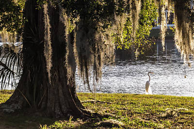 Heron Photograph - Great Egret At The Lake by Zina Stromberg