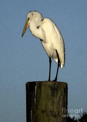 Photograph - Great Egret by Barbie Corbett-Newmin