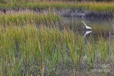 Photograph - Great Egret by Diane Macdonald