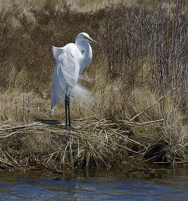 Photograph - Great Egret by Greg Vizzi