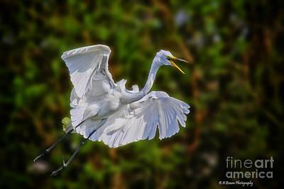 Photograph - Great Egret In Flight by Barbara Bowen