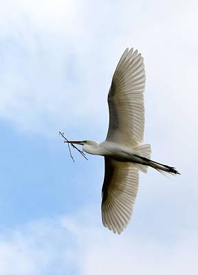 Photograph - Great Egret In Flight by Richard Bryce and Family