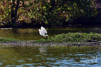 Photograph - Great Egret In Its Realm by Susan Wiedmann