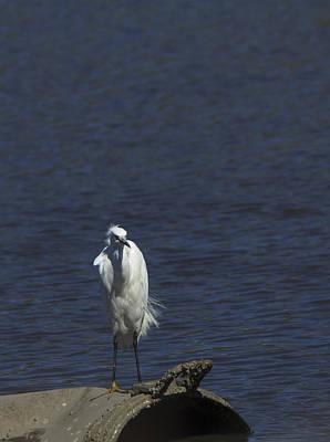 Photograph - Great Egret by Jorge Perez - BlueBeardImagery