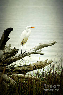 Tree Roots Photograph - Great Egret On A Fallen Tree by Joan McCool