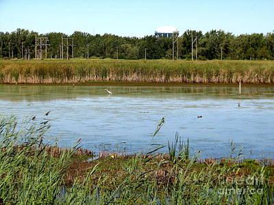 Ducks Photograph - Great Egret On Berm Pond At Tifft Nature Preserve Buffalo New York by Rose Santuci-Sofranko