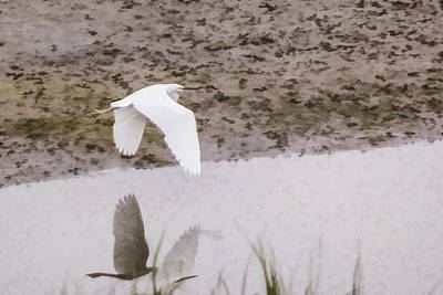 Great Egret Art Print by Photographic Art by Russel Ray Photos