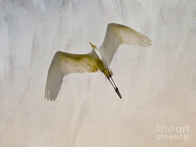 Bird Art Photograph - Great Egret Sky Ballet by Kerri Farley
