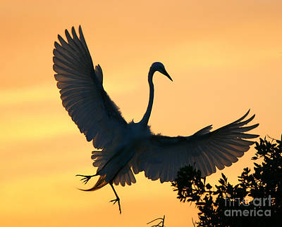 Photograph - Great Egret Sunset Ballet by John F Tsumas