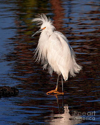 Photograph - Great Egret Walking On Water by Jerry Cowart