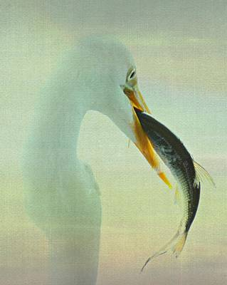 Photograph - Great Egret With Fish by Erin Tucker