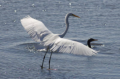 Photograph - Great Egret With Wings Spread by Greg Vizzi