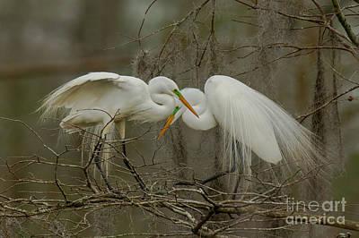 The Bunsen Burner - Great Egrets by Kelly Morvant