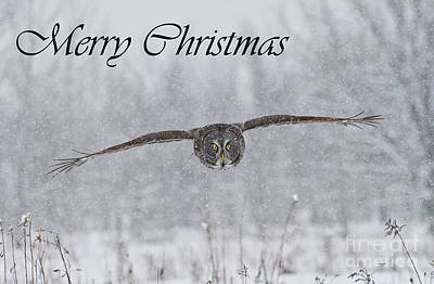 Photograph - Great Gray Owl Christmas Card 2 by Michael Cummings