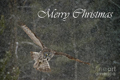 Photograph - Great Gray Owl Christmas Card 8 by Michael Cummings