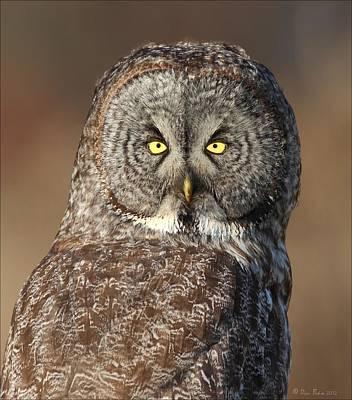 Ggo Photograph - Great Gray Owl Portrait by Daniel Behm
