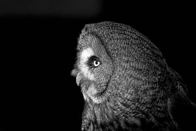 Great Grey Owl 6 Art Print by Simon Gregory