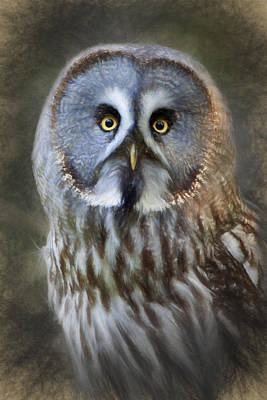 Photograph - Great Grey Owl by Ian Merton