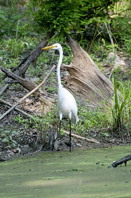 Photograph - Great Heron by Robert Camp