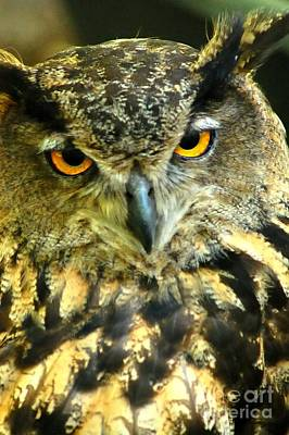 Photograph - Great Horn Owl by Peggy Franz