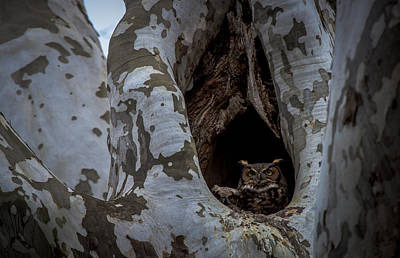 Photograph - Great Horned Owl 2 by Jahred Allen