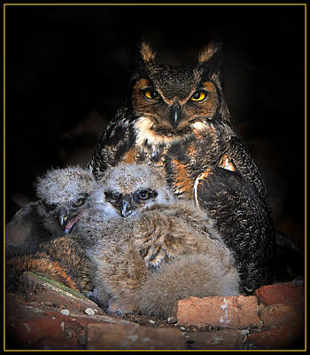 Digital Art - Great Horned Owl And Owlets by Angel Cher