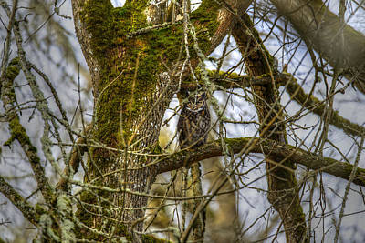 Photograph - Great Horned Owl by David Yack
