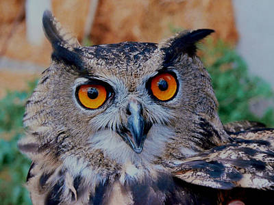 Photograph - Great Horned Owl by Ellen Henneke