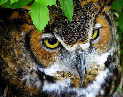 Photograph - Great Horned Owl Eyes by Judy Wanamaker