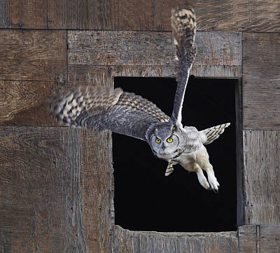 Great Horned Owl Flying Out Of An Old Art Print