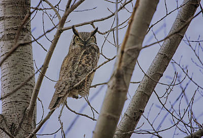 Great Horned Owl Art Print by Gary Hall
