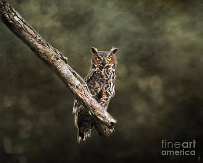 Great Horned Owl I Art Print by Jai Johnson