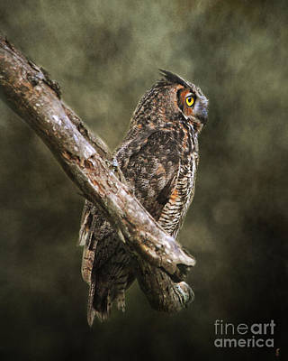 Photograph - Great Horned Owl II by Jai Johnson