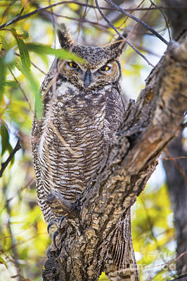 Clouds Royalty Free Images - Great Horned Owl II Royalty-Free Image by Michael R Erwine