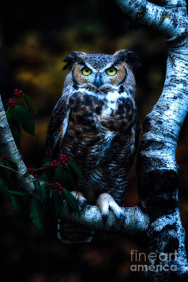 Great Horned Owl II Art Print by Todd Bielby