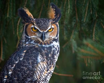 Photograph - Great Horned Owl by Mike Mulick