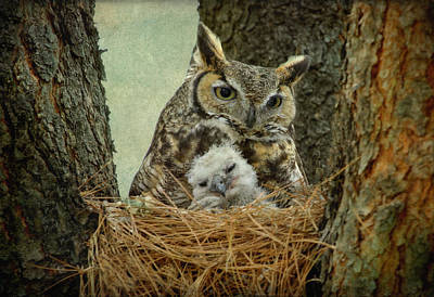 Great Horned Owl Mom And Baby Art Print by Cgander Photography