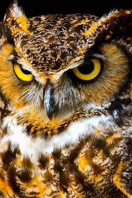 Photograph - Great Horned Owl  by Parker Cunningham