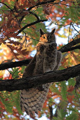 Photograph - Great Horned Owl by Scott Rackers