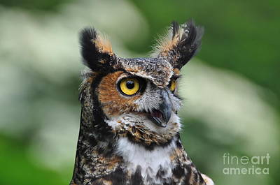 Great Horned Owl Art Print by Suzanne Handel