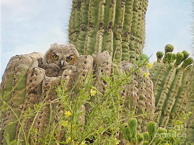 Photograph - Great Horned Owlet In Saguaro by Marianne Jensen