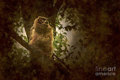 Photograph - Great Horned Owlet Textured by Sharon Talson