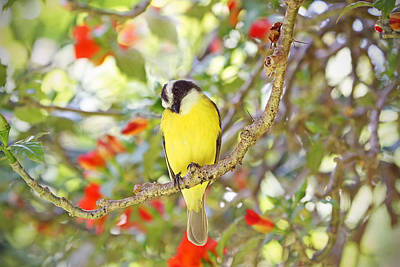 Photograph - Great Kiskadee And Flowers by Peggy Collins