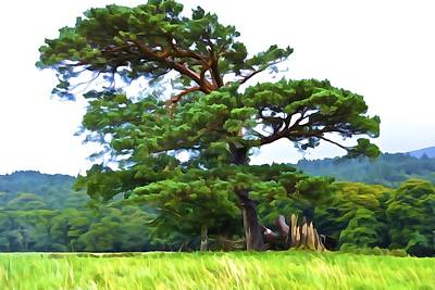 Photograph - Great Pine by Charlie Brock