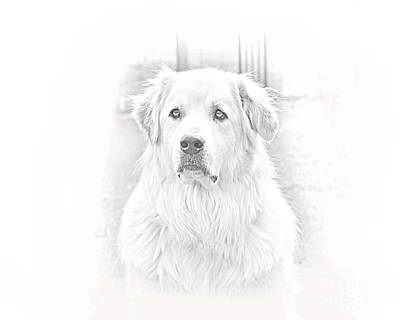 Dog Photograph - Great Pyrenees Head Shot by James BO  Insogna