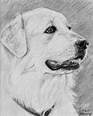Drawing - Great Pyrenees In Profile by Kate Sumners