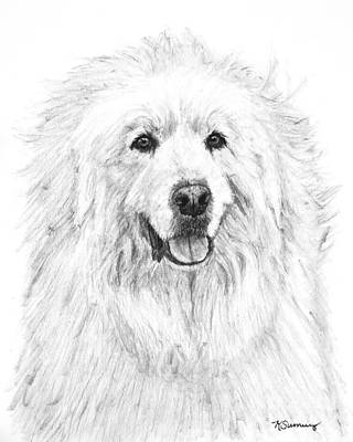 Drawing - Great Pyrenees Study by Kate Sumners
